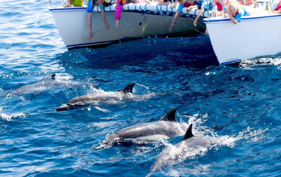 dolphins_whales-e1475849686335.jpg